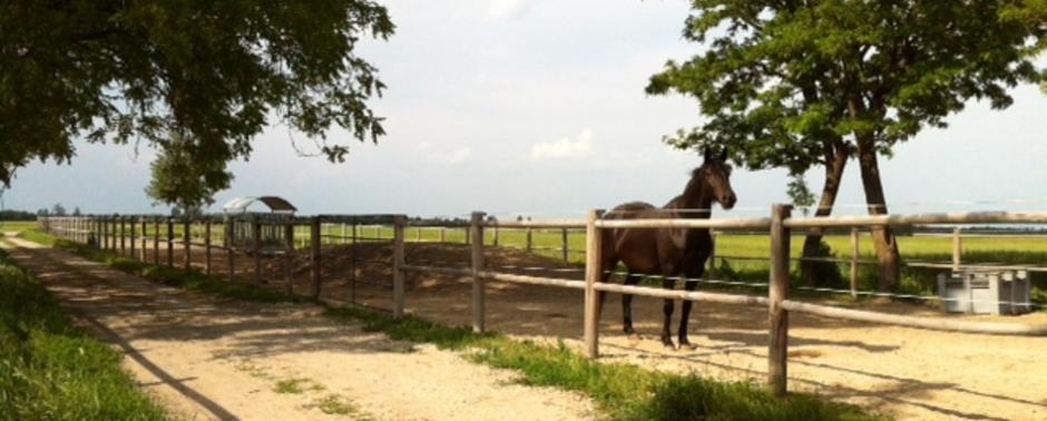 PferdeSinn - Rossverstand für Kinder und Erwachsene